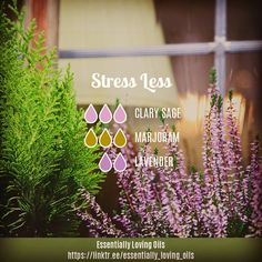 """10 Likes, 2 Comments - Darlene Ryan (@essentially_loving_oils) on Instagram: """"Stress Less Diffuser Blend . * Aromatic Profile: Herbaceous 81.8%, Floral 18.2% * Emotion: Very…"""""""