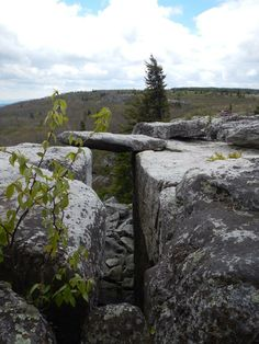 Dolly Sods Near Canaan Valley, Wv