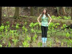 creativity tip fertile soil - YouTube