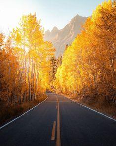 Aspen, Country Roads, Photography, Instagram, Autumn, Photograph, Fall Season, Fotografie, Photoshoot