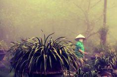 Beste Reisezeit Vietnam gesucht? Das kommt ganz darauf an wohin Du willst, denn das Land ist sehr groß und hat unterschiedliche Klimazonen. Eine Übersicht..
