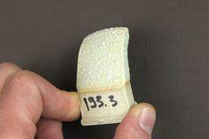 TP193 By Tristan Philippe | Base simple. Cône 7 (1240°). Soak/Palier de 45 min. Variation 3 : - Nepheline 66 - Craie (whiting) 14 - Kaolin (EPK) 12 - Ball clay 8 + Carbonate de magnésium 4 Firing : - 100°/hr -> 900° - 120°/hr -> 1240° - 45min soak (Palier) Ceramic Glaze Recipes, Philippe, Ceramic Artists, Pottery, Clay, Ceramics, Crafts, Food, Texture