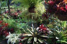 Beautiful Bromeliads