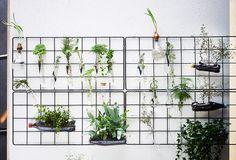Tuininspiratie on a budget: update je muur met een klimplantrek en wees creatief | IKEA IKEAnederland IKEAnl wooninspiratie inspiratie klimplanten   BARSÖ klimplantrek rek tuinieren RIMFORSA houders reageerbuisjes KORKEN fles flessen