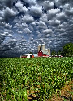 Wisconsin - Phil Koch I created the series of Horizons in 2010 as photographic journey through the landscapes of Wisconsin.