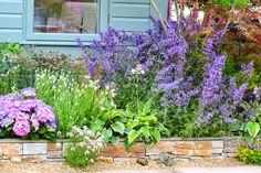 Le devant de sa maison, c'est ce que l'on voit en permanence de l'extérieur ou dès que l'on franchit le pas de la porte. C'est pourquoi il est important de bien le fleurir. Quel que soit le style de votre maison et de votre jardin, sur quelques mètres carrés, il est possible de faire des merveilles avec quelques plantes. Privilégiez des plantes qui fleurissent au fil des saisons afin d'avoir de la couleur et du volume tout au long de l'année. N'oubliez pas quel...