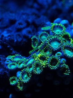 Blue and green underwater coral