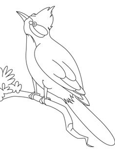 Robin Bird Coloring Pages Best Of A Nightingale Bird Watching Coloring Page Bug Coloring Pages, Diy Coloring Books, Animal Coloring Pages, Mandala Coloring, Printable Coloring Pages, Nightingale Bird, Bird Outline, Bird Template, Simple Line Drawings