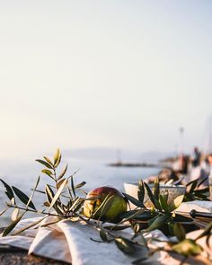 "Jessie on Instagram: ""Calm moments by the lake.  Happy Sunday ✨ _________________________________ #foodphotography #foodstyling #picknick #joinmeforcoffeedear…"" Happy Sunday, Jessie, Food Styling, Food Photography, Calm, In This Moment, Plants, Travel, Instagram"