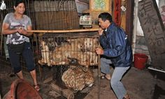 Chinese city holds dog-meat festival early to avoid animal-rights protests. Yulin residents bring forward annual summer solstice festival as objections increase and Chinese lose taste for dog meat.