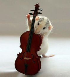 According to Alex Leichtman Charikova 6 Months Neman, this rat is playing a cello. I believe her, but I'm still going to tell myself it's a double bass so I can name the rat Ted :D Animals And Pets, Baby Animals, Funny Animals, Cute Animals, Fancy Rat, Cute Rats, Cute Mouse, Rodents, Animals Beautiful