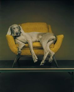 Chilling Out...by William Wegman