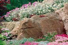 ROCKS WITH ALPINE PLANTS. THE ALPINE GARDEN SOCIETY'S 'MAGIC OF THE MOUNTAINS'…