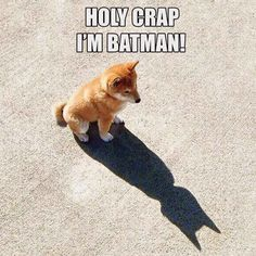 Unless you can be batman. Then be [BATMAN] Funny Dog Memes, Funny Animal Memes, Cute Funny Animals, Funny Animal Pictures, Cute Baby Animals, Funny Cute, Dog Pictures, Funny Dogs, Cute Dogs