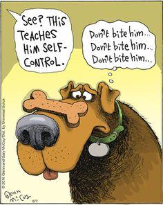 The Flying McCoys-control Funny Animal Pictures, Funny Animals, Secret Life Of Dogs, Dog Comics, Dog Jokes, Christmas Jokes, Cartoon Dog, Funny Cartoons, Comic Strips