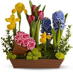 Order & buy mother's day flowers online from Giftblooms. We offer exclusive mother's day flower delivery anywhere in Canada. Choose your flowers from our stunning mother's day flowers collection. Mothers Day Flower Delivery, Mothers Day Flowers, Spring Blooms, Spring Flowers, Spring Bulbs, Dish Garden, Easter Flowers, Cut Flowers, Fresh Flowers