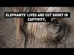 Elephants Are Dying in Zoos - YouTube