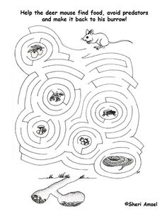 Maze - What Does the Mouse Eat?