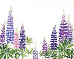 lupine by Barbara Cooney (Miss Rumphius)