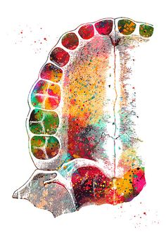 'Palate' by erzebetth Dental Wallpaper, Dentist Art, Creative Wall Painting, Dental Office Decor, Dental Life, Dental Facts, Medical Art, Dental Hygienist, Dental Assistant