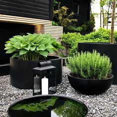 INTERIOR INSPIRATION - Therese Knutsen Back Gardens, Outdoor Gardens, Outdoor Planters, Modern Gardens, Lush Green, Garden Projects, Pallet Projects, Garden Ideas, Garden Inspiration