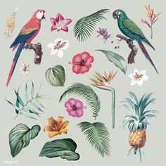 Colorful tropical collection with vintage illustration | free image by rawpixel.com Creative Illustration, Bird Illustration, Free Illustrations, Vintage Grunge, Floral Flowers, Vintage Flowers, Free Poster, Ara, Doodle