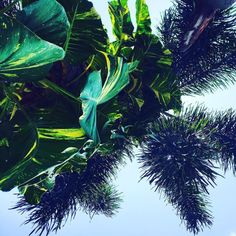 From under the palm tree and where I'd rather be  #liveandlovelife #bali #holiday #wife #trip #explore #sun #shine #sunshine #hot #heat #poolside #tropical #tunes #dj #perfect #palmtree #summer #color #colour #photography @explorebali @explorebali.id @balibucketlist @bali_fix @thebalibible @thebaliguideline @balicili @balipedia @destination.earth @beautifuldestinations @moodygrams @agameoftones #scenery #capture #moment #instagram #pictureoftheday #picture
