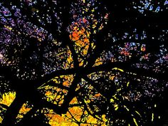 Stained Glass Limbs by JP McKim