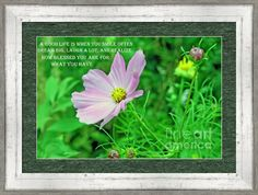 Cosmo With A Good Life Quote Framed Print By Kay Novy #framed #art #flower #Cosmo #pink #nature #life #quote #photography #KayNovy #kkphoto1