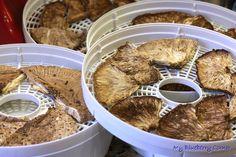 Czubajka kania – jak ją jeść?