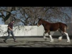 2013 Official Super Bowl Commercials  ( Budweiser - The Clydesdales) this is one of my favorite ones