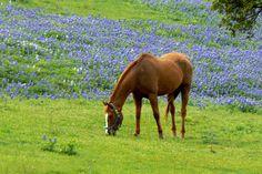 Ellis County, Texas