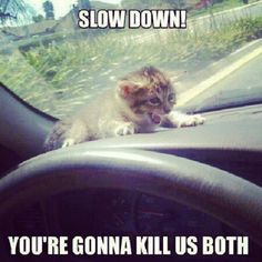 Slow Down! You're Gonna Kill us Both funny lol humor funny pictures funny pics funny images funny animal pictures funny animal memes really funny pictures funny pictures and images funny animal captions funny animal pics with captions Humor Animal, Funny Animal Jokes, Funny Cat Memes, Animal Quotes, Funny Animal Pictures, Funny Animal Videos, Funny Dogs, Funny Humor, Animal Pics