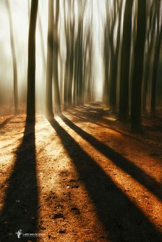 Photo Shadows par Lars van de Goor on 500px
