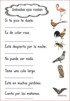 Animales que vuelan. Comprensión lectora de frases. Spanish Worksheets, Spanish Teaching Resources, Spanish Language Learning, Teaching Tips, Spanish Class, Spanish Lessons, Telling Time In Spanish, Reading Comprehension, Animals For Kids