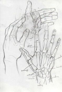 Anatomy Drawing Tutorial the leading tone - Anatomy Sketches, Art Drawings Sketches, Cool Drawings, Hand Drawings, Drawing Hands, Drawings On Hands, Indie Drawings, Bee Drawing, Skeleton Drawings