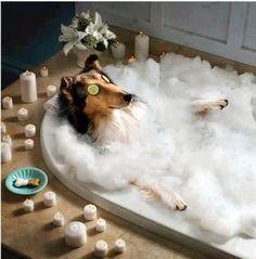 Funny dog bathtime