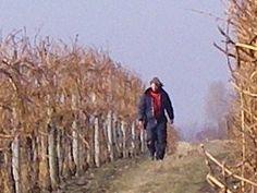 Pruning 2009 Wines, Vineyard
