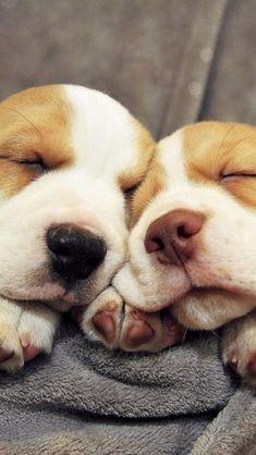 3 Tips to Combat Stress & Sleep Better Basset Hound Dogs Puppies Dog Puppy Pup