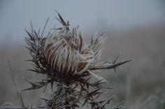 https://flic.kr/p/ASQhFb | frozen thorns