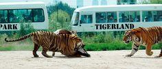 Tigerland Animal Park image