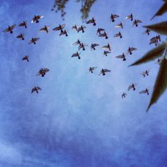 Tauben am Himmel