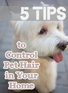 Tips To Control Pet Hair In Your Home