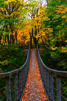 Fall of suspension bridge, Kuroishi, Aomori, Japan