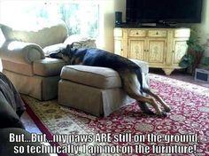 Hahaha my dog does this.