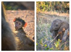 Here is everything you need to know about the best Kruger campsites & where to see wildlife:
