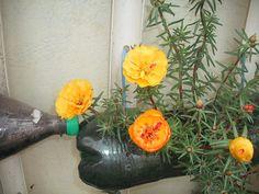 Chic é reutilizar: jardim vertical com garrafas pet | Jardim do Coração