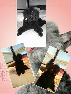 My dog Ella