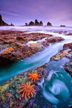 Starfish Colony - West Coast of New Zealand  Last minute summer holidays www.hkoffers.com