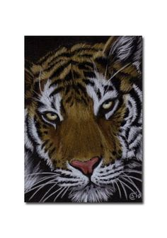 TIGER 36 portrait big cat feline pencil painting Sandrine Curtiss Art Limited Edition Print ACEO by Sandrinesgallery